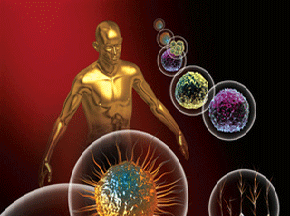 immune system graphic