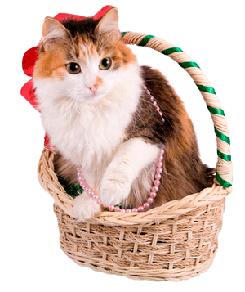 elegant cat in gift basket